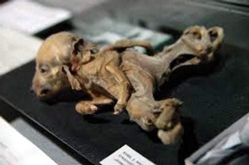 Chernobyl mutated animals
