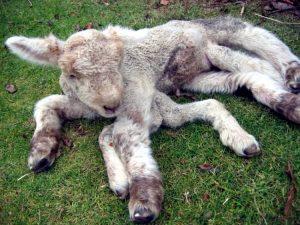 Fukushima mutated animals