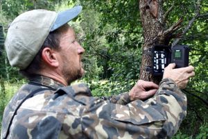 Bear chernobyl exclusion zone