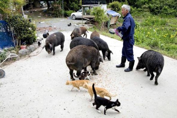 abandoned animals of fukushima