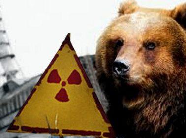 Bear in Chernobyl