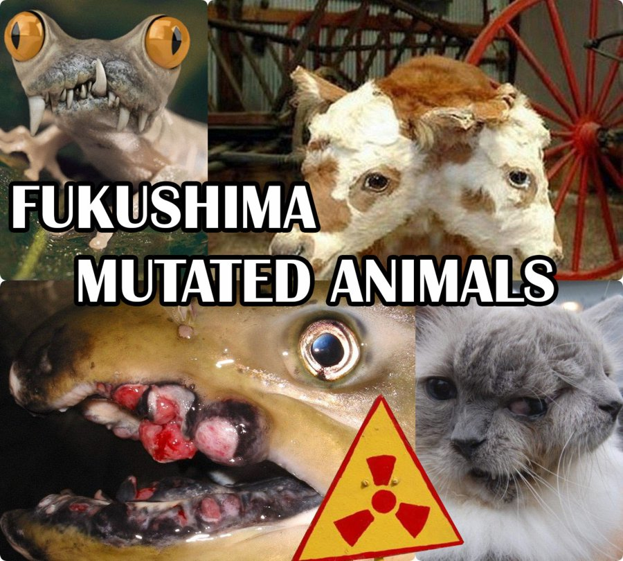 Fukushima Mutated Animals After Irradiation With Radiation