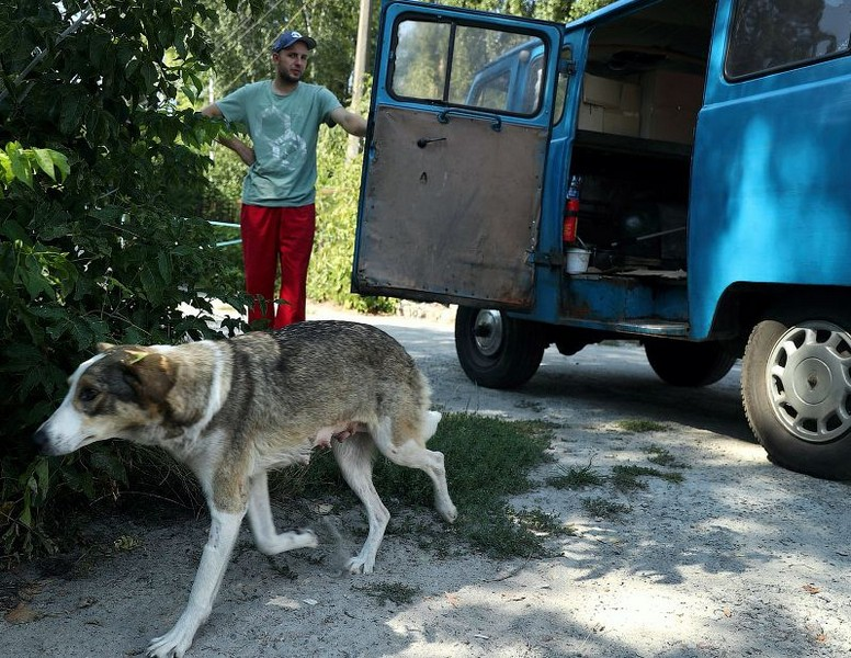 chernobyl stray dogs