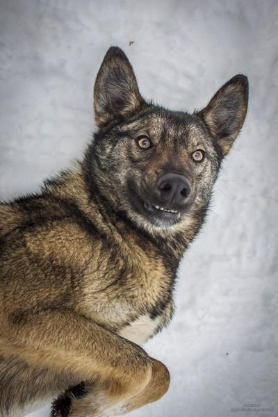 chernobyl radioactive dogs