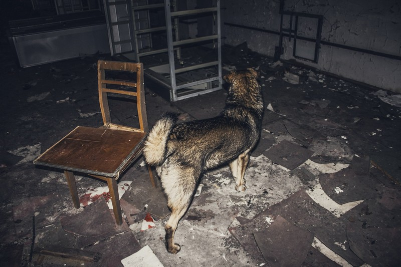 dogs of chernobyl