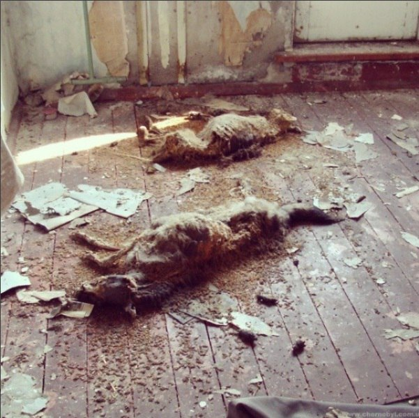 Dogs in Chernobyl