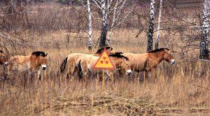 horses in chernobyl