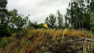 Sandstone Plateau burial ground in Pripyat